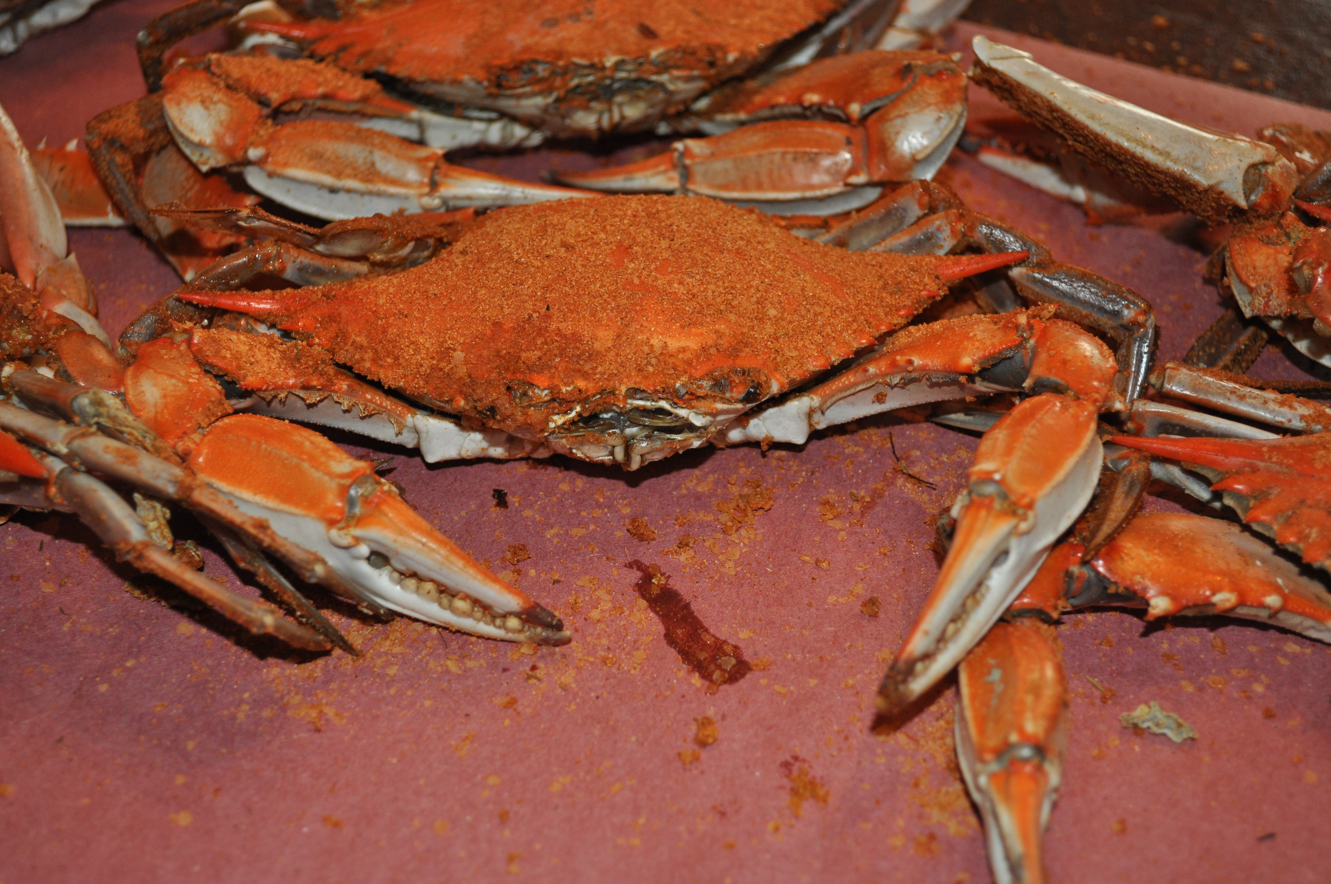 Maryland Blue Crab, An Eastern Shore Tradition!