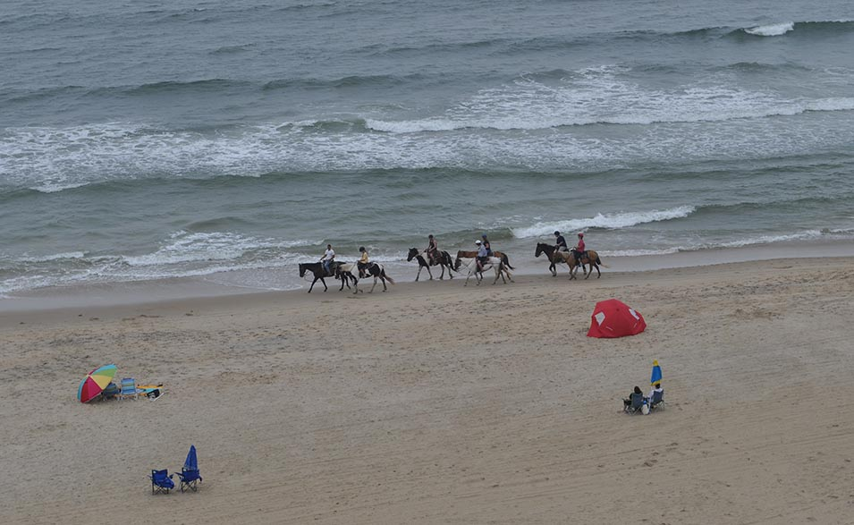 Horses on Virginia Beach